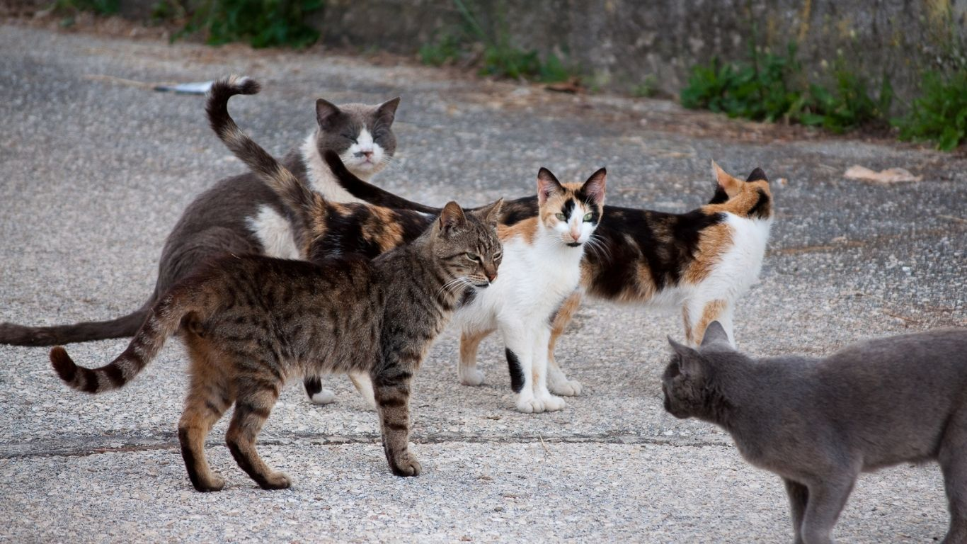 Local cat lovers have begged for our help! WE INTEND TO HELP! 1