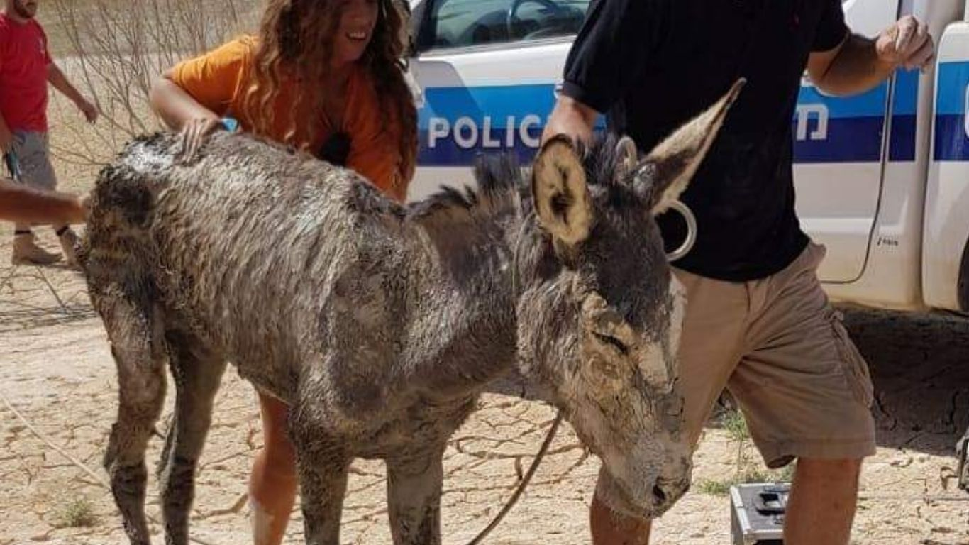 EXTREMELY URGENT! MAYHEM IN ISRAEL. Animals caught up in a battle that is none of their making! 2