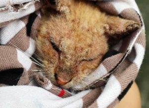 What the pandemic is doing to these animals is SHOCKING: please help! 4
