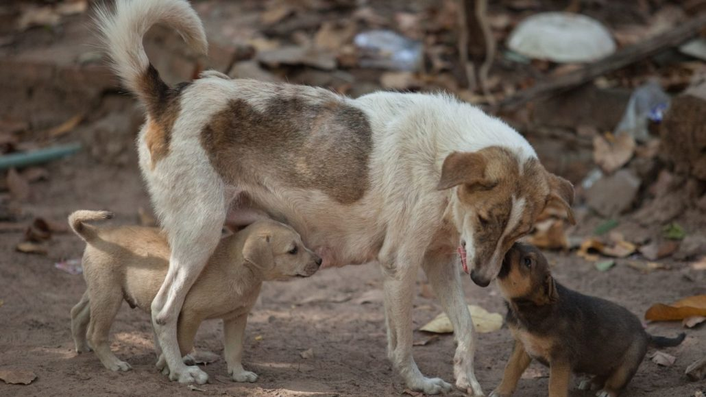 Will YOU be part of one of the largest-ever projects to save stray dogs? 19