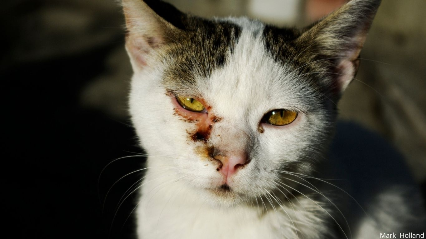 Local cat lovers have begged for our help! WE INTEND TO HELP! 3