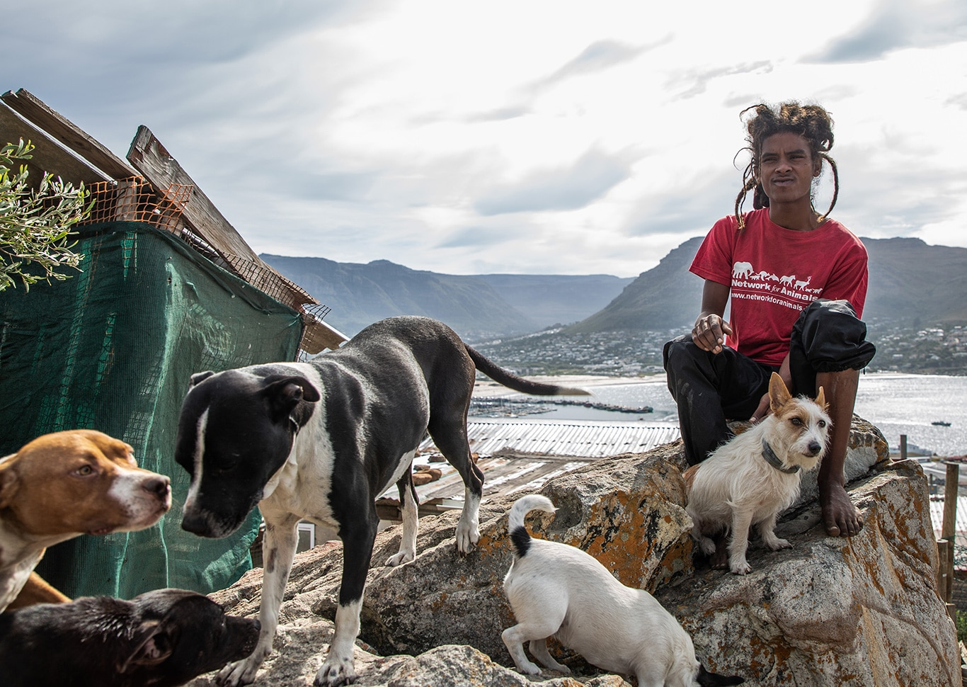 Dogs in distress - The dogs of Hangberg