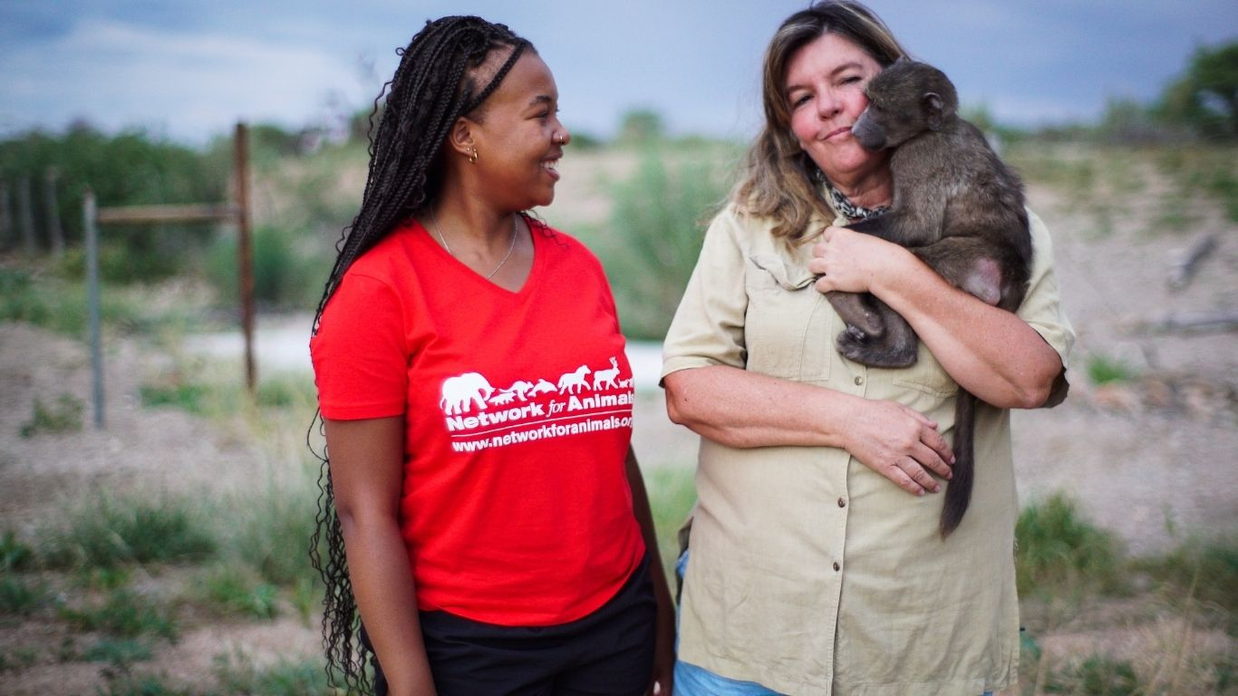 Our Partners caring for baby baboons at the sactuary