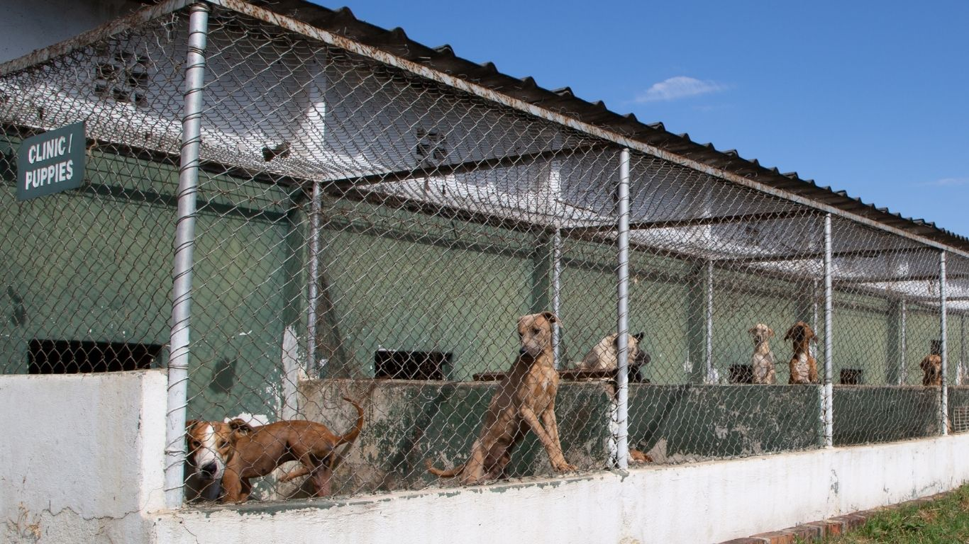 TIME IS OF THE ESSENCE! We're working around the clock to PREVENT POSSIBLE DEATH for nearly 500 dogs, 145 cats, horses and a donkey. We MUST SAVE THIS SANCTUARY! 2