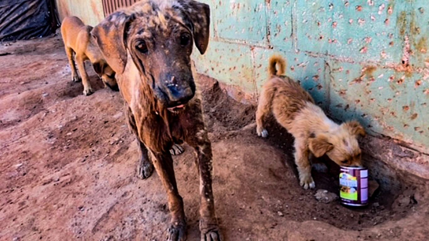 URGENT! Dogs are starving and sick, hidden from tourist eyes. These dogs need your help right NOW! 3