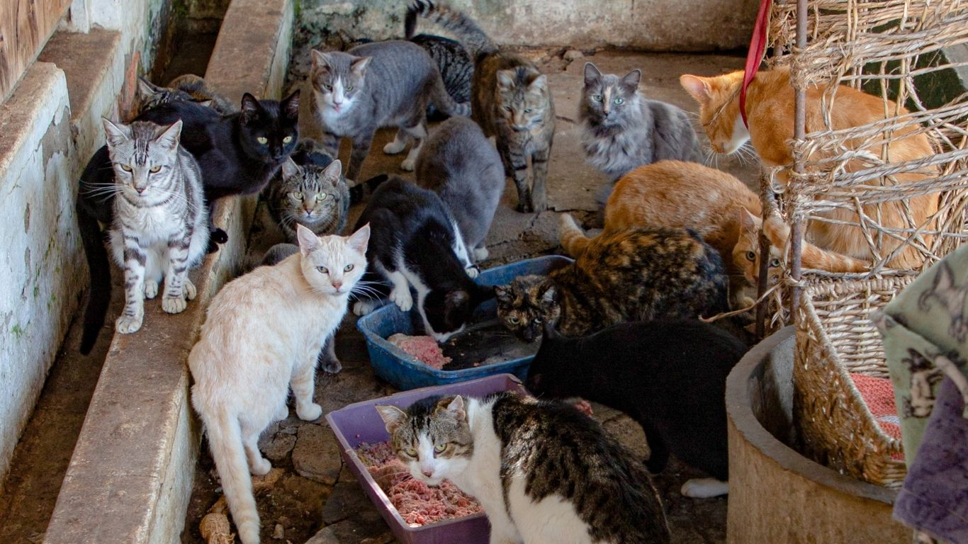 TIME IS OF THE ESSENCE! We're working around the clock to PREVENT POSSIBLE DEATH for nearly 500 dogs, 145 cats, horses and a donkey. We MUST SAVE THIS SANCTUARY! 3