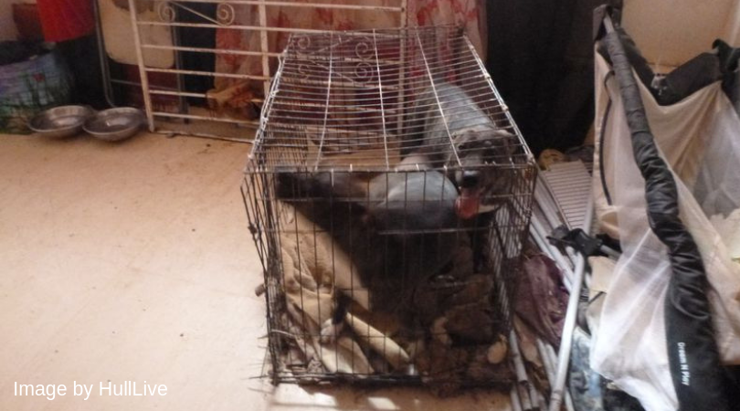 English woman who made caged dogs rip each other to pieces escapes jail 6
