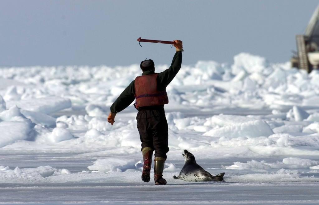 Evidence Lacking for Canada's Seal Hunt 6