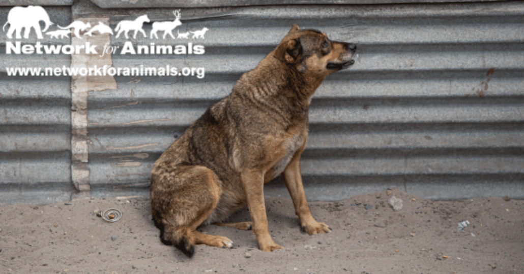 Animal shelters are burdened by South Africa's economic downturn 1