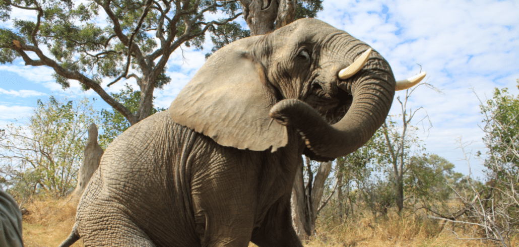 The story of a very important elephant 2