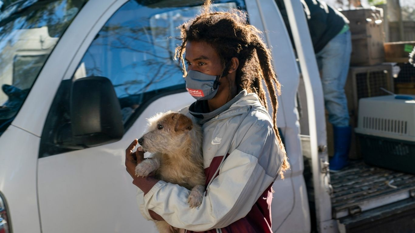 Thanks to you, 12 dogs in desperate need are now receiving life-saving medical treatment! 1