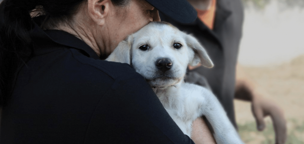 Donations help us curb the untold suffering of dogs around the world 2
