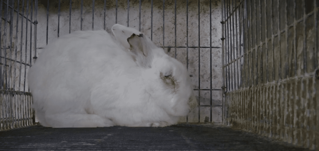 Animal testing should be banned worldwide. This is 2019. 1