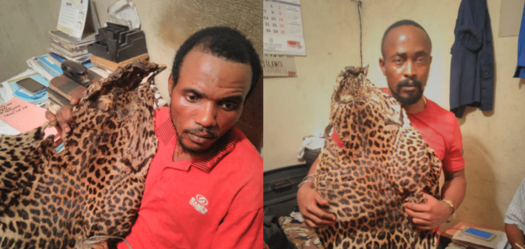 Army officer nailed for wildlife trafficking in Kinshasa 1