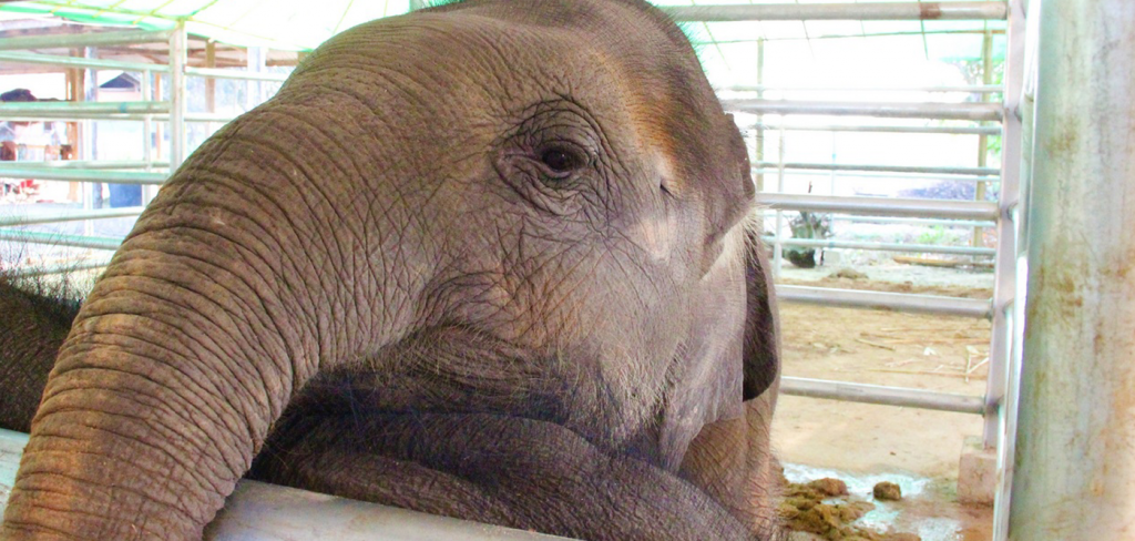 35 more baby elephants being sent from Zimbabwe to lives of hell in China 8