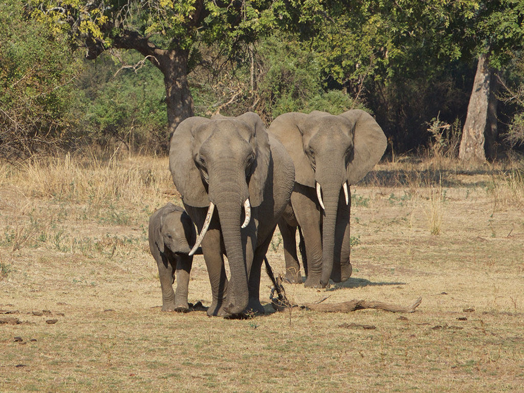 Outrage grows over baby elephant sale 1
