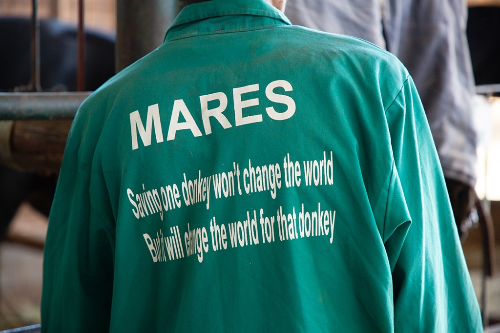 BRIAN DAVIES AWARD 2020: And the winner is…. MARES donkey sanctuary in Zimbabwe! 2