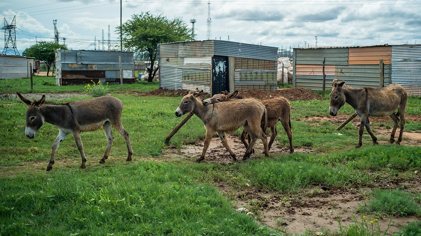 Maimed and emaciated donkeys need your help! 3