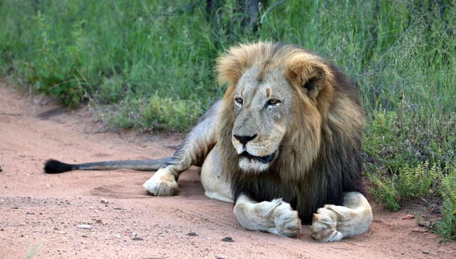 Companies are Profiting From Trophy Hunting