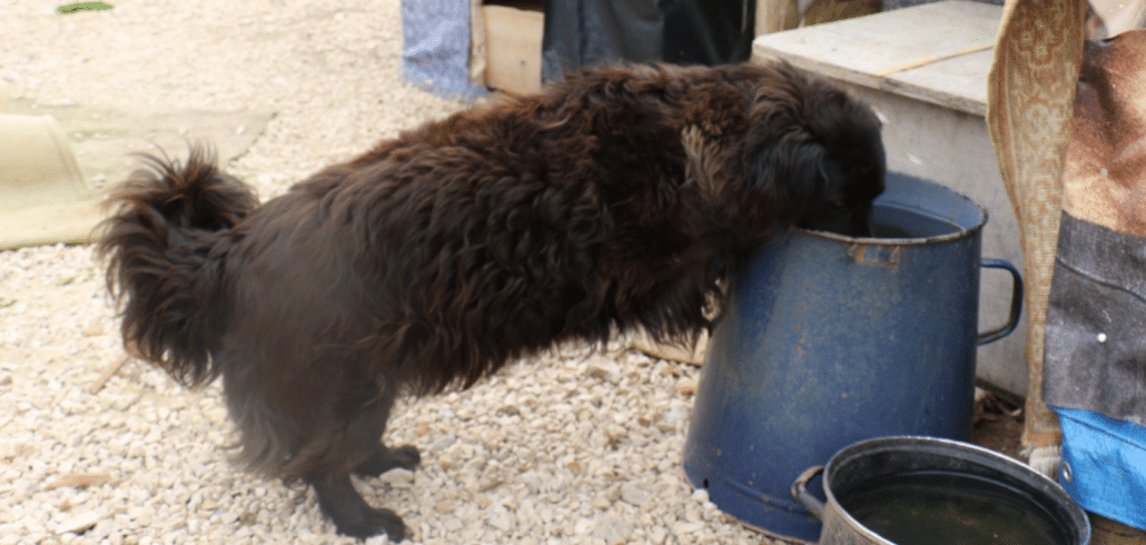 300 dogs in Croatia depend on us to survive 3