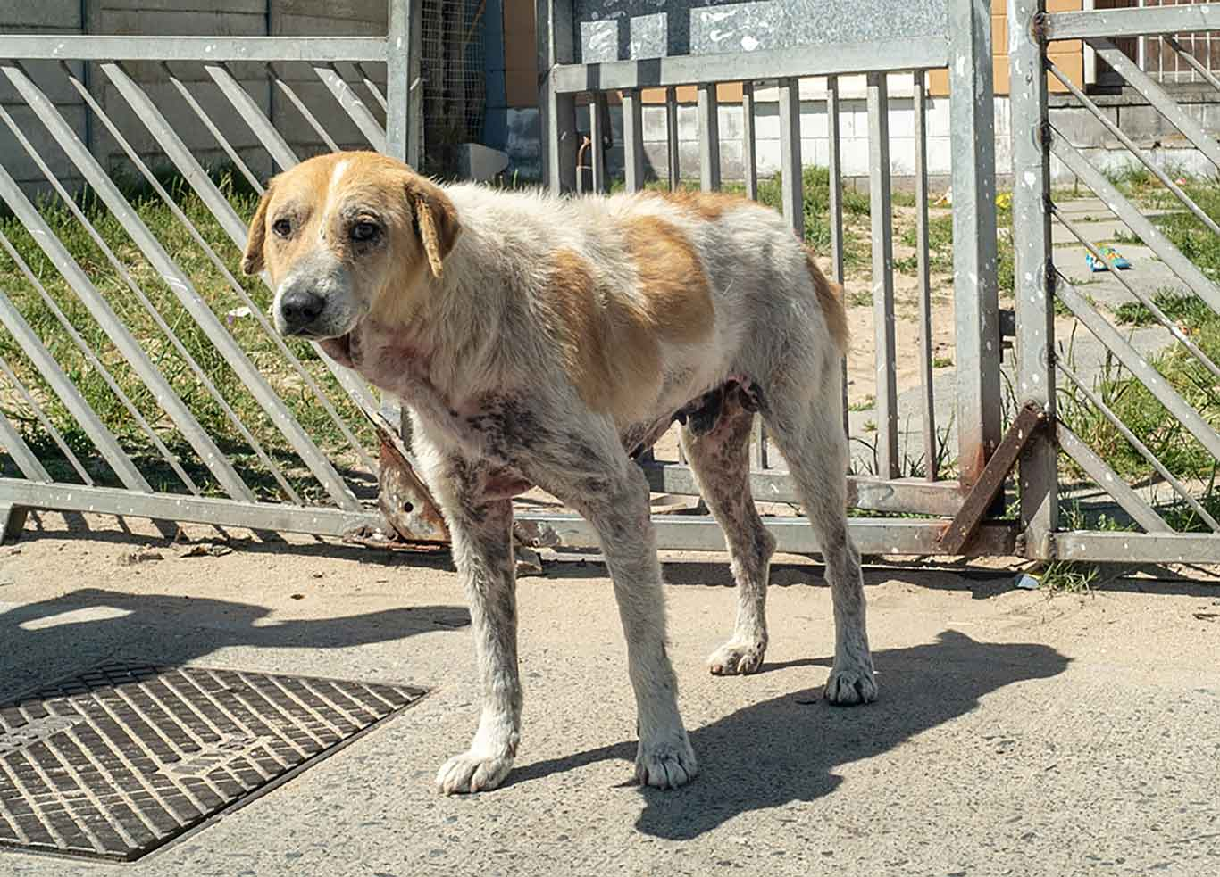 Time is running out to save 365 hungry dogs from starvation in South Africa. 1