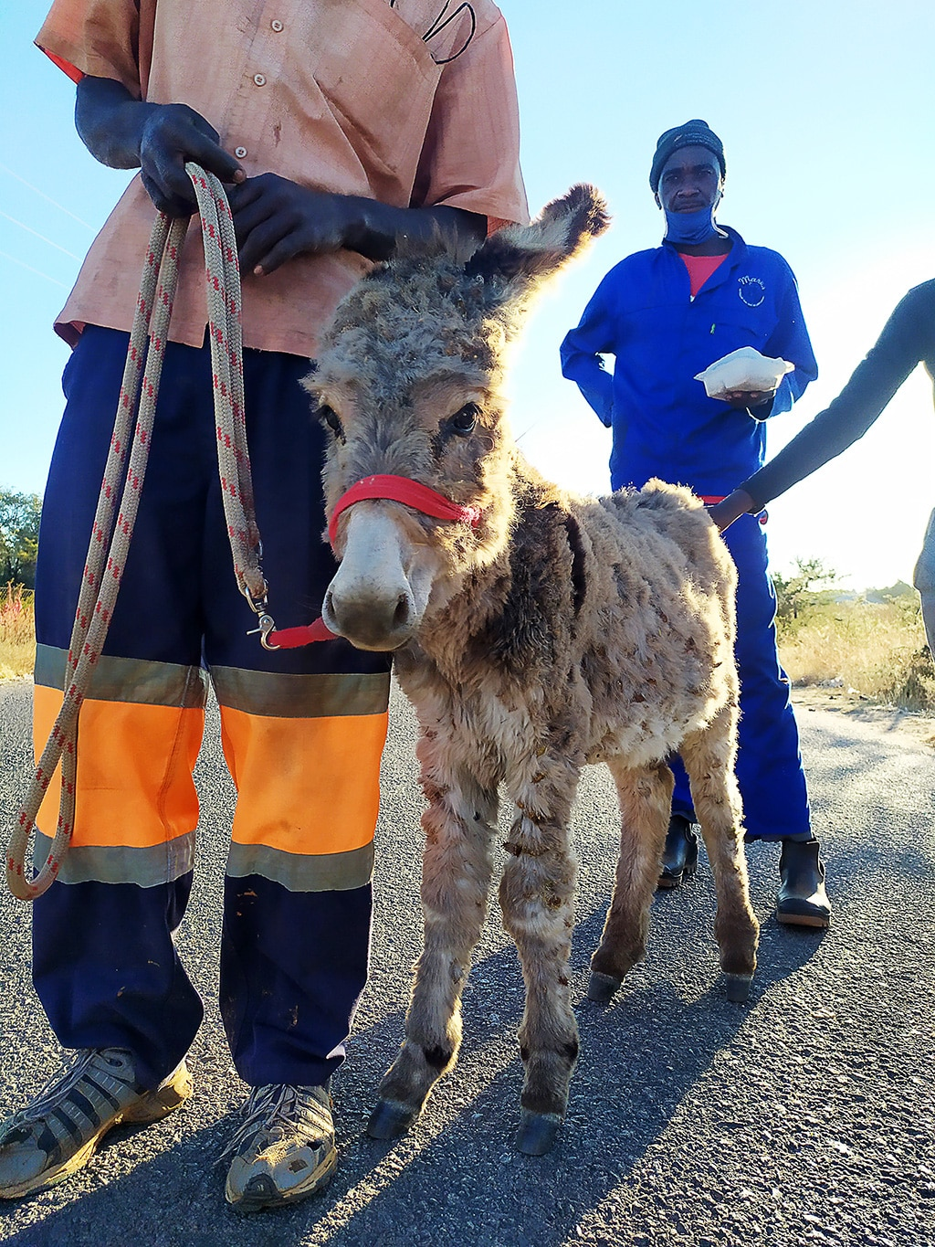 We delivered two tons of hay to save starving donkeys 1