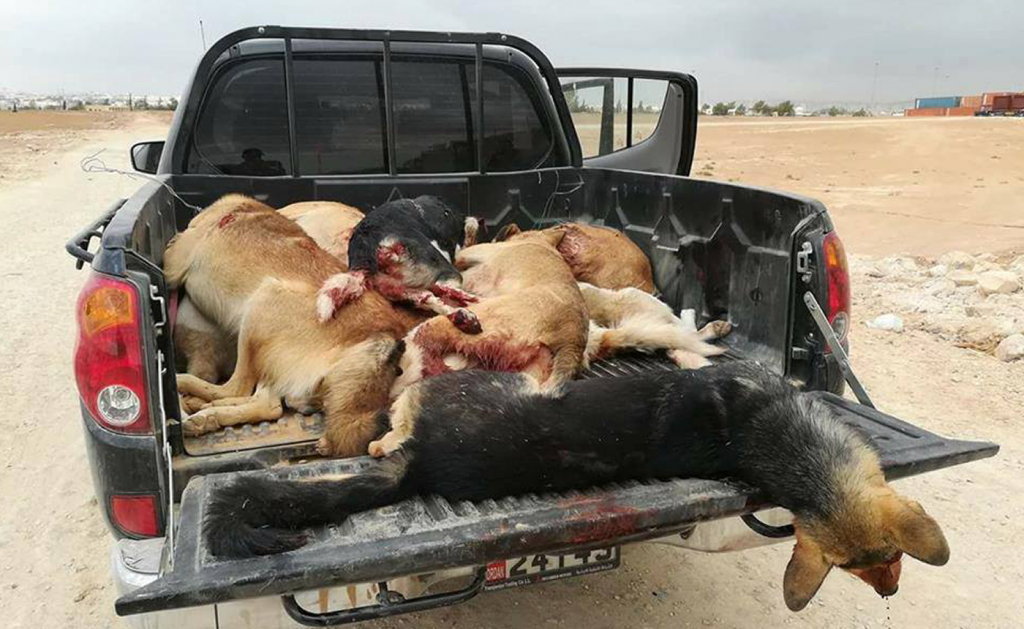JORDAN IS KILLING EVERY STREET DOG IN THE COUNTRY 4