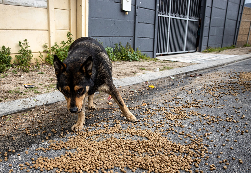 Cape Town Street Dogs Strike It Lucky Thanks to Network for Animals 2