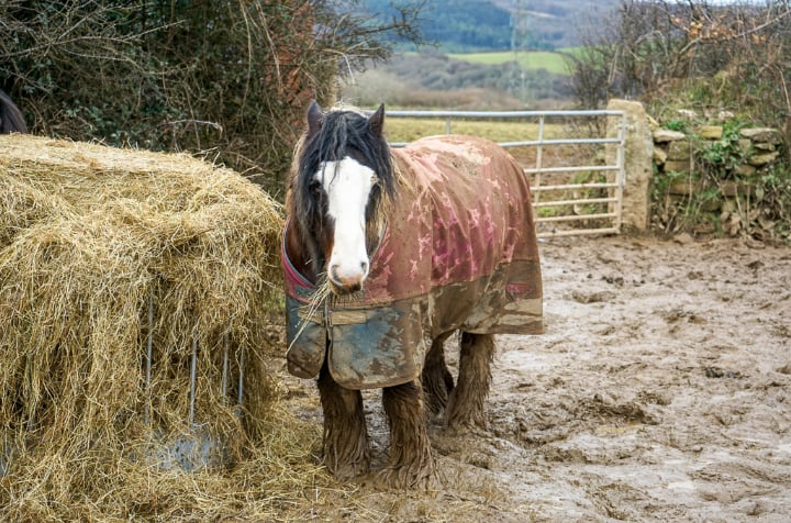 A desperate fight to keep 15 ponies alive through winter! 3