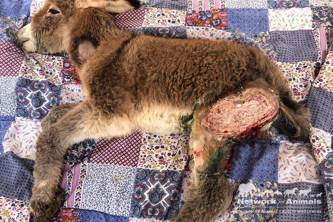 Cruel children separate baby donkey from mother and ABUSE HER! 2