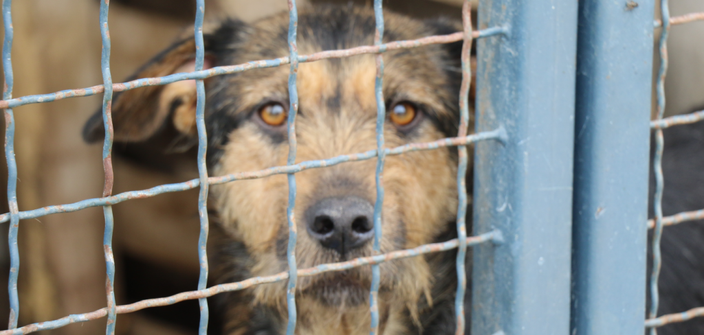 When the cages are full, KILL THE DOGS! 3