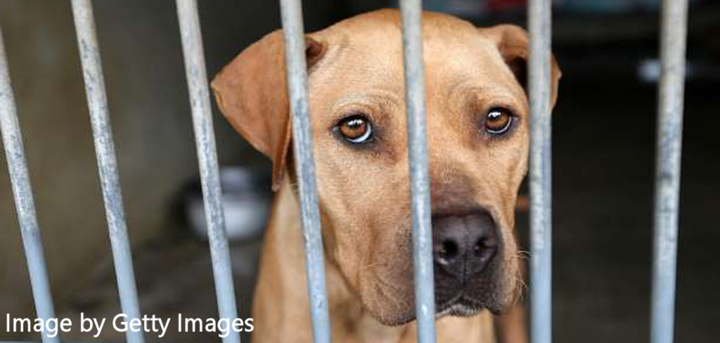 Online registry of animal abusers, a lifetime victory for animal welfare in North Carolina 1