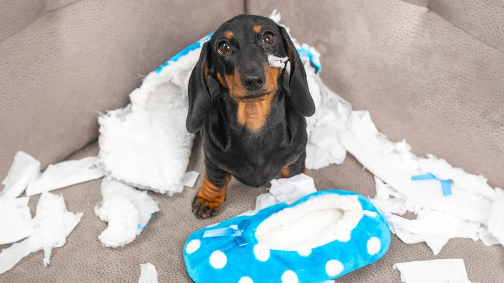Ease Your Dog's Separation Anxiety