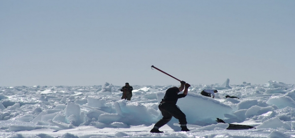 Death Knell for Seal Hunt? 1
