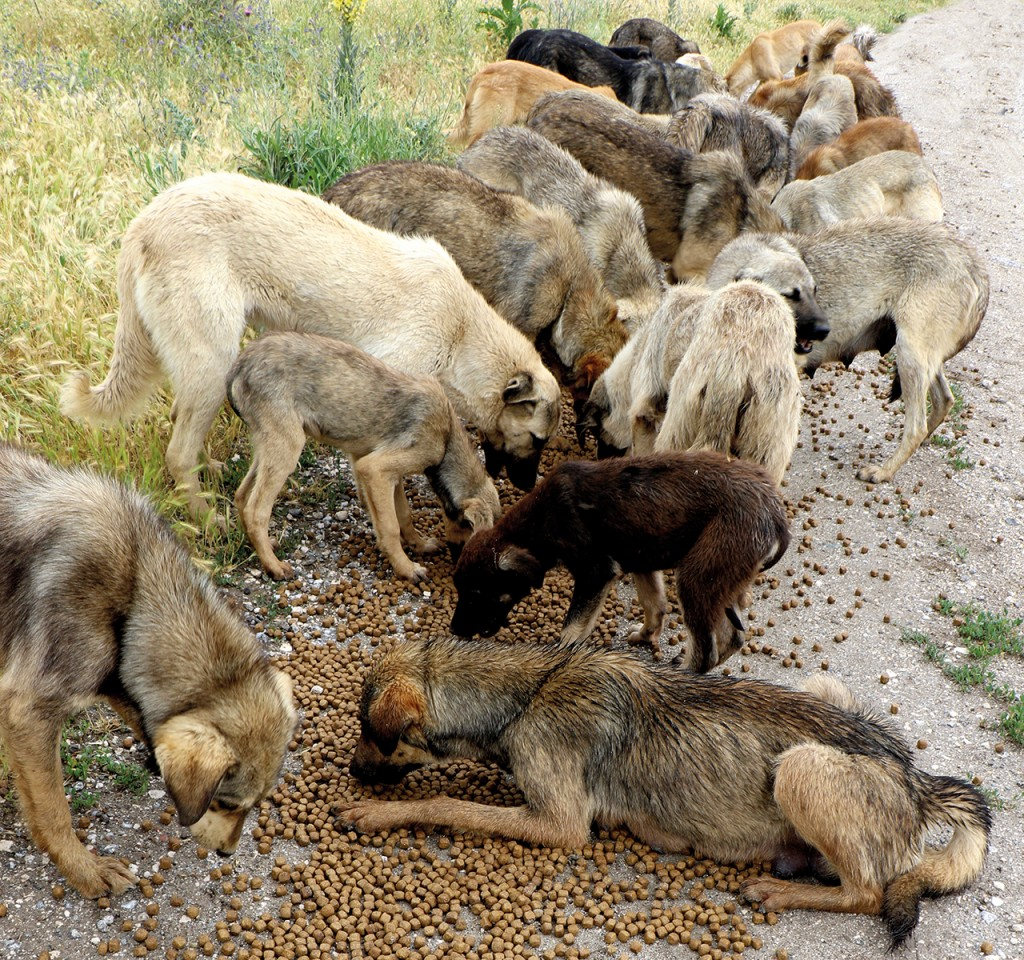 Extermination of dogs in Turkey 2