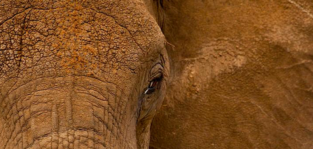 Vietnam continues to be a major centre of ivory trading 1